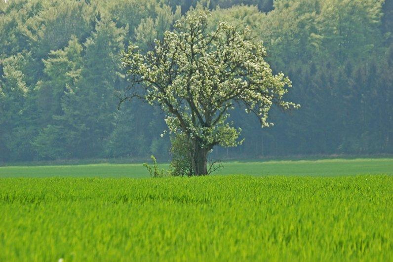 Landschaft Eifel