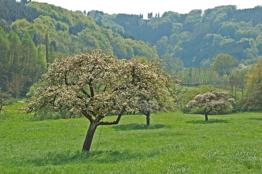 Landschaft Wiersdorf