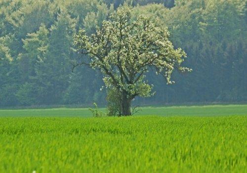Welche Landschaftseinheiten bilden die Eifel?